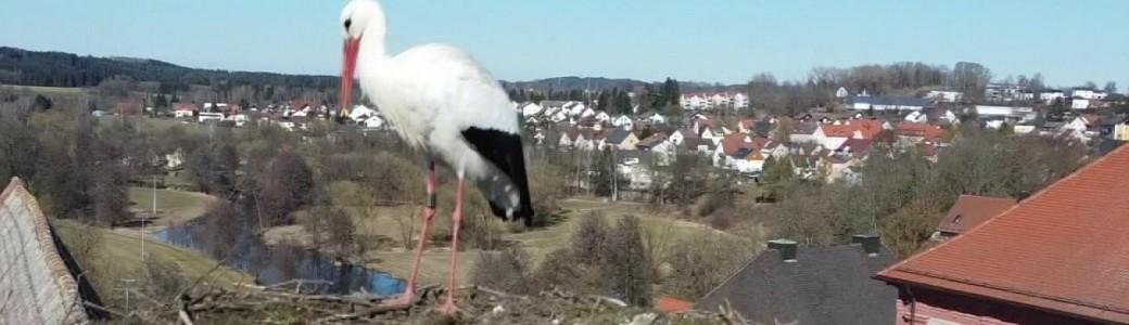 Storch Neunburg